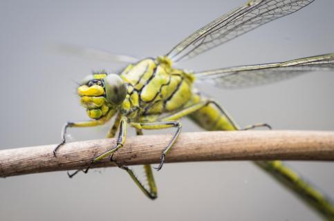 Auge in Auge mit einer Libelle
