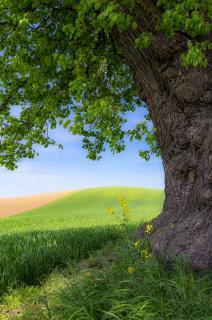 Blick ins grüne Land
