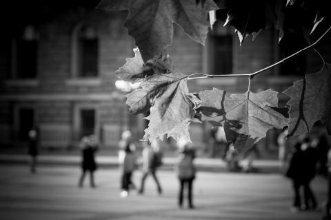 Herbst-Blick