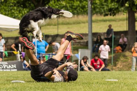 italy 2017 - DogFrisbee