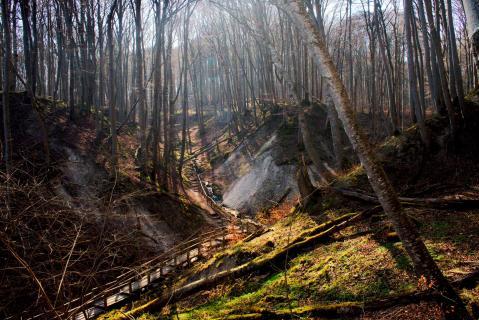 Sonnenlicht durchdringt den Wald