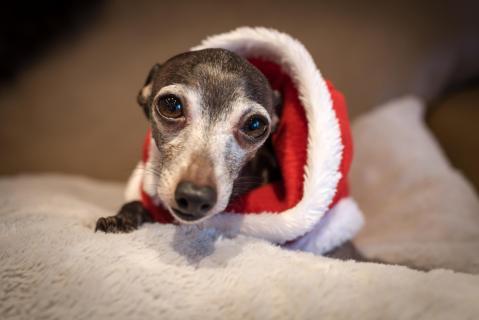 Der Weihnachtsmann ist da !
