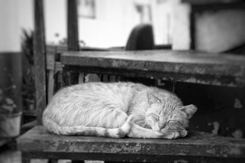 Hauskatze beim Mittagschlaf