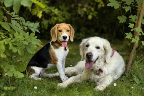 Fiene und Bella