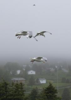 Möwen im Nebel