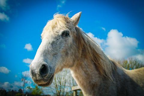 Ireland Horse