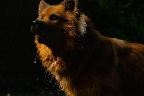 Maxl in the dark