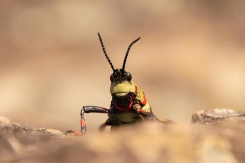 Grashopper looking over the edge