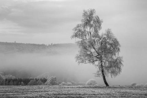 cold winterday
