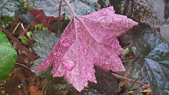 Viele kleine Regentropfen