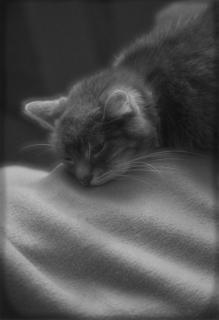 Finny beim schlafen