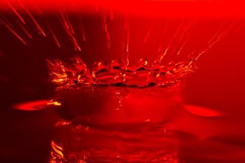 rote Wasserkrone
