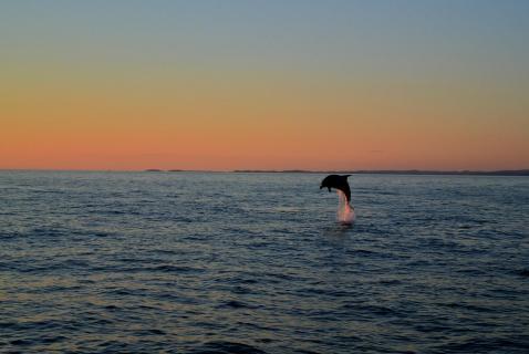 Der einsame Delphin