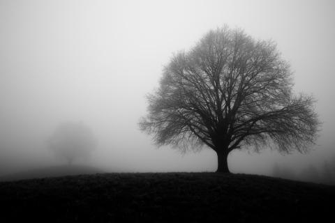 Linden im Nebel