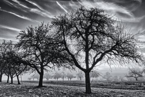 Bäume und Nebel