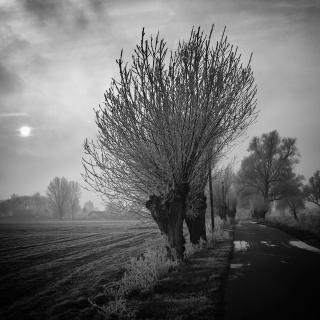 Wintermorgen im Oderbruch