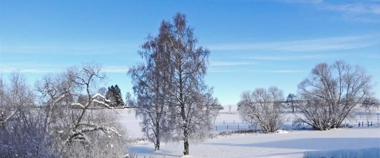bernhardrieder_winter_im_schwarzwald