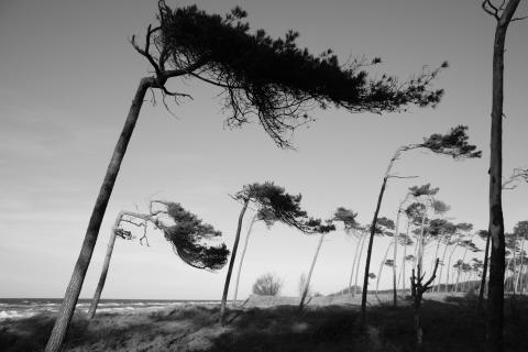 Weststrand auf der Halbinsel Darß