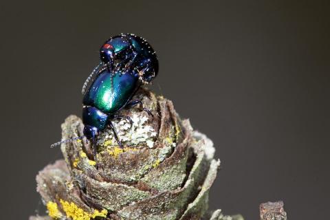 Makro Insekten 02