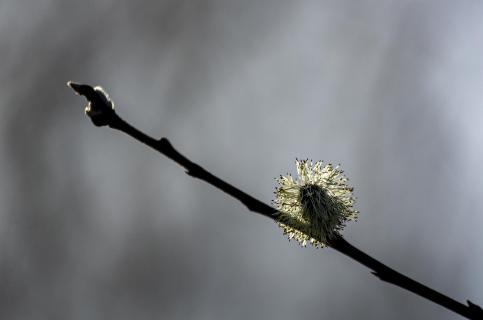 Frühlings Spuren