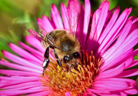 Blüte mit Biene groß 5805