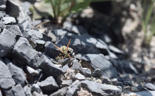 Lauf Biene lauf