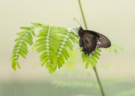 Schmetterling 0000025