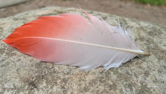 Vogelfeder mit Wassertropfen