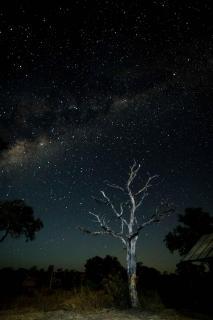 African Nightsky