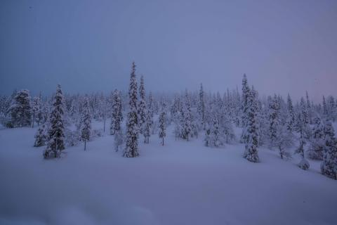 Northern snow ...