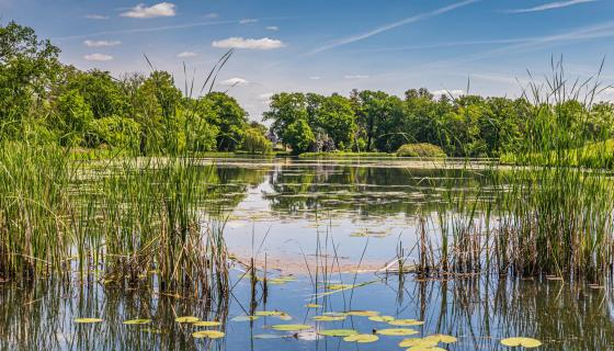 Teichlandschaft Wörlitzer Park