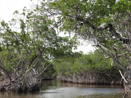 Irrgarten durch die Mangroven