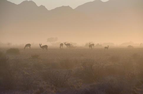 Morgenstimmung in der Namib Wüste