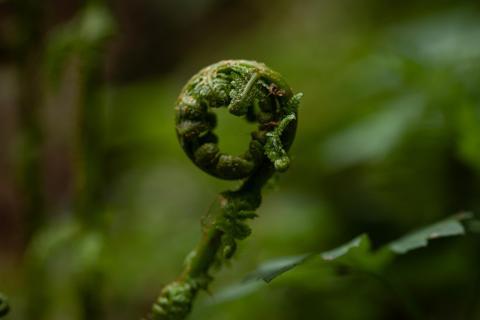 Grüne Perfektion
