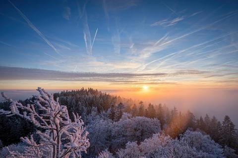 frosty dawn 2