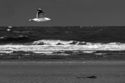 Möwe am Meer