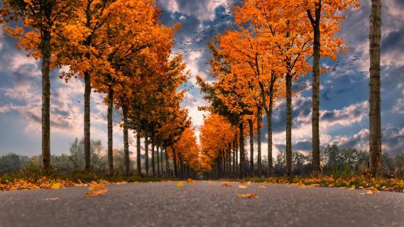 Herbstalle