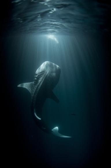 Kategorie: Unterwasserwelten  Mitternächtliches Festmahl