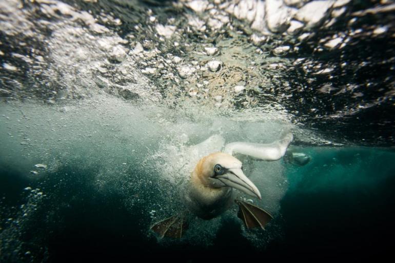 GDT Europäischer Naturfotograf des Jahres 2014