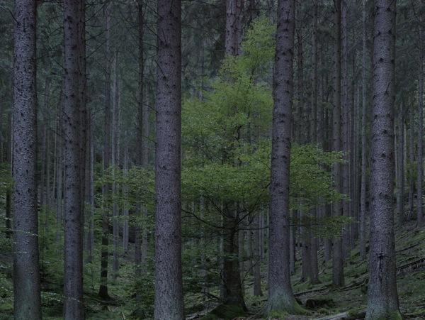 Wald: Landschaften der Erinnerung