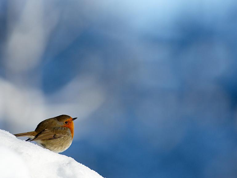 GEO sucht die schönsten Vogelfotos - zu gewinnen gibt es eine Kamera.