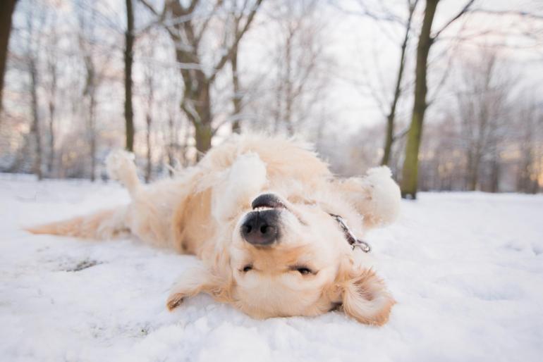 Iza Łyson versucht, in ihren Fotos den individuellen Charakter des jeweiligen Hundes einzufangen.