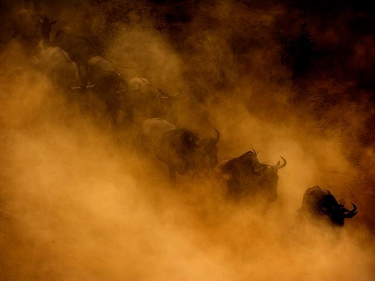 """Die """"Nacht der Naturfotografie"""" in Gudensberg steht im Mai unter dem Motto """"Sehnsucht Afrika"""""""