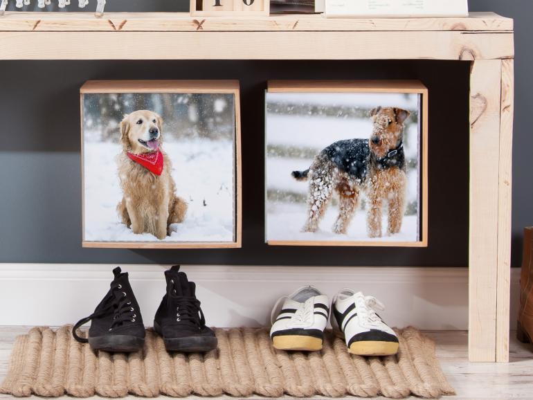 Mit diesen 5 Tipps gelingt jedes Hundefoto