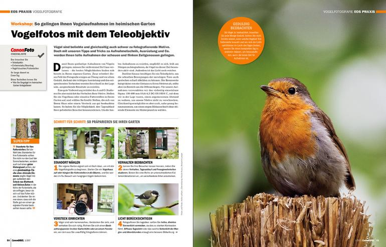 Vogelfotos mit dem Teleobjektiv