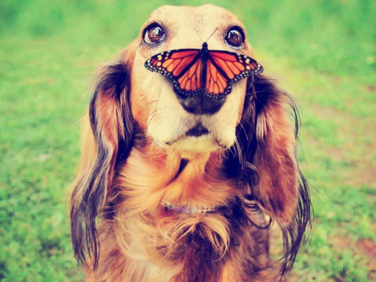Comedy Pet Photography Awards: Die lustigsten Haustierfotos gewinnen