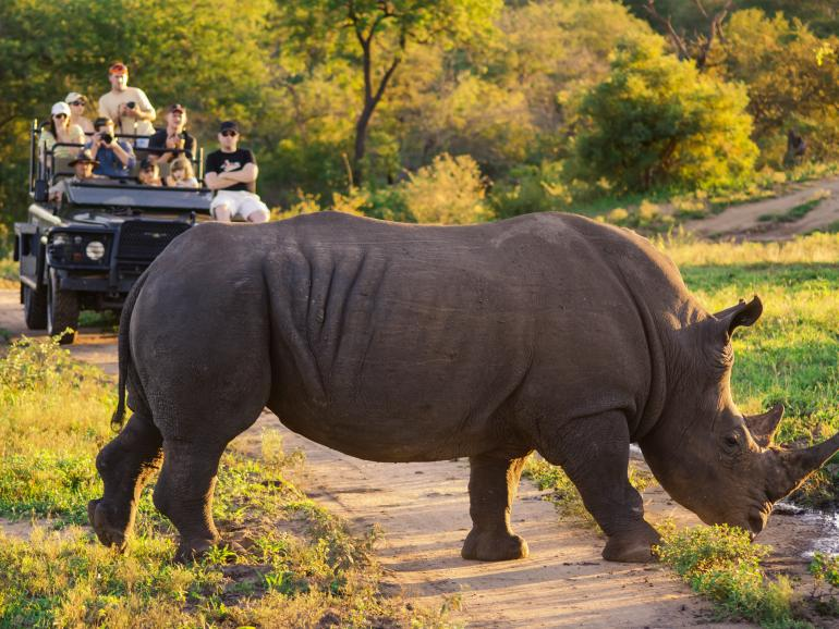 Südafrika und Photo+Adventure laden zur Safari