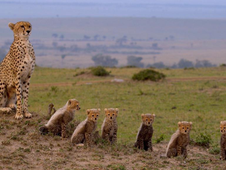 Film-Tipp für Wildlifefans: Maleika