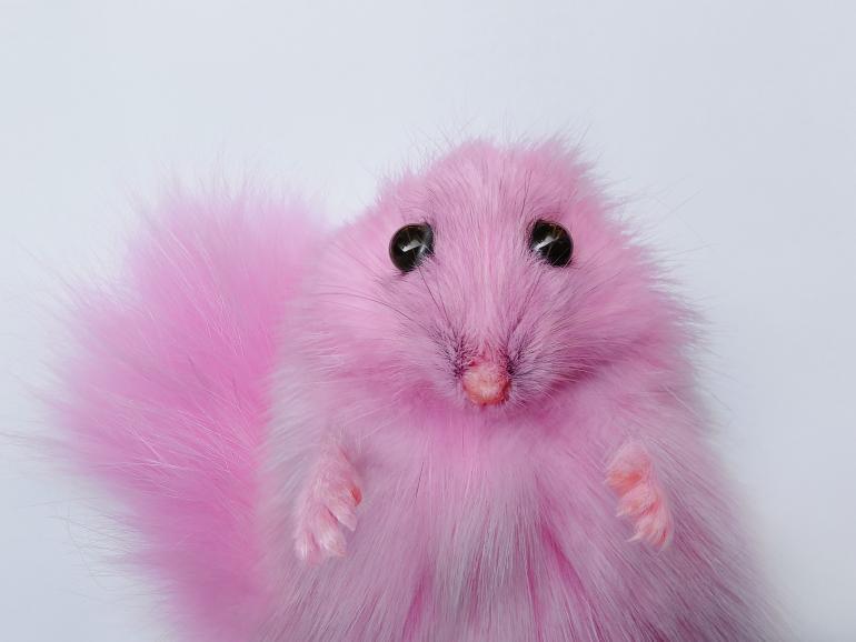 Der rosa Hamster