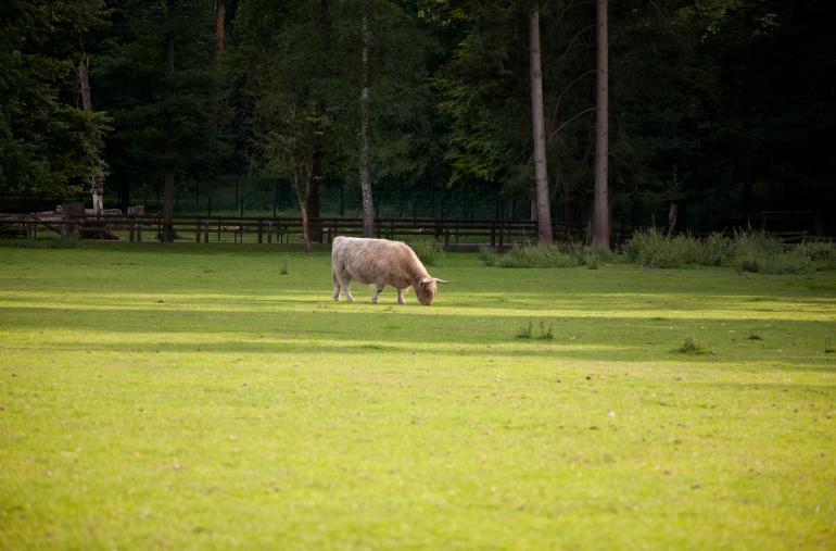 Sigmas Supertelezoom - scheue Wildtiere vor der Linse